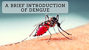 A Brief Introduction Of Dengue