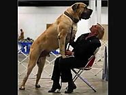 The largest and biggest dog breeds