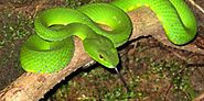 Dangerous and Curious Animals in the Amazon Rainforest - HERE2HELPS