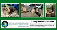 Tree and Stump Removal Services – D&D Tree Services