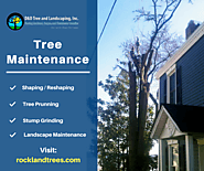 Residential Tree Maintenance & Care Services