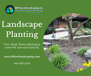 Landscape Planting : NY & NJ Tree Services