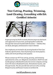 Affordable Tree Cutting, Prunning & Trimming Services