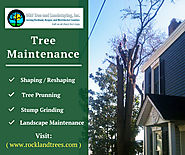Tree Maintenance In Rockland NY
