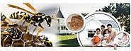 Commercial Pest Control Services Provider Company : On Monthly, Weekly, Fortnightly, Quarterly or Daily basis. Call N...