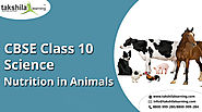 Nutrition in animals Important notes of CBSE class 10 science