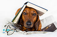 What do you do if your dog chews a dictionary? Take the words out of its mouth!