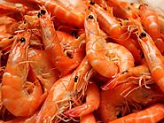 Shrimp Market Report