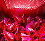 Superdream LED Grow Light for Indoor Garden Greenhouse and Hydroponic Full Spectrum Growing Lamps 15W 225pcs Red Ligh...