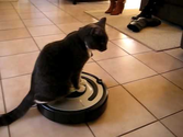 Dexter the cat rides the Roomba
