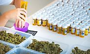 The Swiss cannabis farm aiming to supply 'legal weed' across Europe | Science | The Guardian