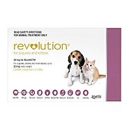 Revolution for Dogs: Buy Revolution Online - Heartworm and Flea Prevention for Dogs with Selamectin - CanadaVetExpres...