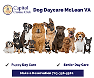 Dog Daycare Services in McLean,VA – Arnold Calvin – Medium
