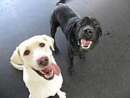 Capitol Canine Club | Dog Daycare McLean VA | Dog Day Care McLean | Dog Boarding Virginia | Capitol Canine Club