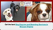 Dog Daycare and Boarding Services In McLean Virginia