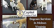 Dogcare Services In Mclean Virginia