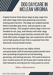 Dog Daycare & Boarding Services in McLean Virginia