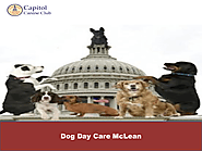 Dog Day Care McLean