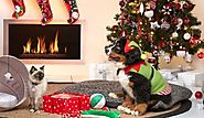 It's Time for Christmas Shopping for Your Pet | BudgetPetWorld