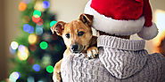 This Christmas- Be a Better Pet Lover – CanadaVetExpress – Pet Care Tips
