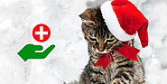 Wish Your Kitty A Healthy New Year. Avail Finest Deals Here – CanadaVetExpress – Pet Care Tips