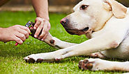 Are You Afraid Of Nail Clipping Of Your Dog? Don't Worry – BudgetPetWorld