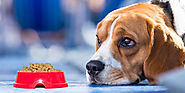 Are You Upset And Finding The Reason For Your Dog Not Eating The Food? – CanadaVetExpress – Pet Care Tips