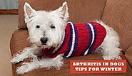 Arthritis In Dogs: Tips For Winter and Treatment | BudgetPetWorld