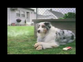 15 Hilarious Dog Commercials You Have to See | Funny Dog Ads You Love