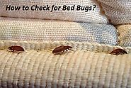 How to Check For Bed Bugs? - How to Tell If You Have Bed Bugs?