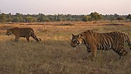 Tadoba national park booking | Tadoba booking