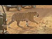 Best package for Tadoba national park booking