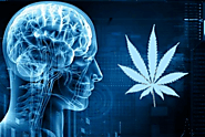 A Detailed Look at CBD's Effectiveness in Treating Neurological Disorders