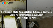 Expert Mold Remediation and Removal Services