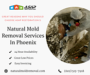 Natural Mold Removal Services in Phoenix – Peter Parkar – Medium