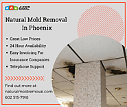 Great Mold Removal Services in Phoenix