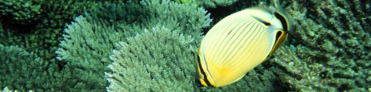 Headline for Types of Sealife in Maldives – Exotic Animals