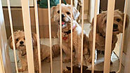Ever Wondered How to Keep your Dog Safe? Go Through - Pet Blog