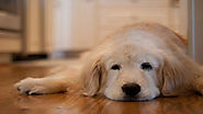 You are Not Aware of these Health Conditions your Dog may have - Pet Blog