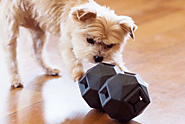 What Makes A Pet Toy Chewable and Safe for Your Dog? - Pet Blog