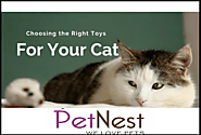 5 Useful Tips That Can Help You Find the Right Toy for Cats - Pet Blog
