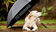 How much is pet health insurance – Why to buy insurance for pets