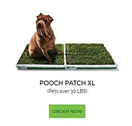 Why You Need Artificial Grass Potty Patch for Your Home?