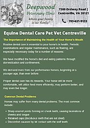 Equine Dental Care | Centreville veterinarian