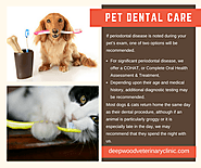 Pet Dental Care | Deepwood Veterinary Clinic