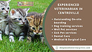 Experienced Veterinarian In Centreville