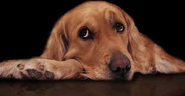 Diary of a Sad Dog Viral Video, Canine Thoughts We Never Knew About