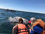 Gray Whale Watching in Baja with Family and Friends