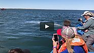 Best Whale Watching Trip