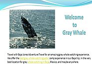 Grey Whale watching in Baja